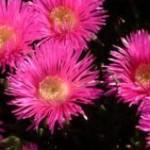 Un passeig botànic per la Màquia i la Garriga