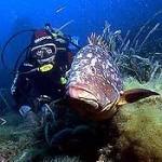 Submarinisme a la Costa Brava